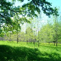 ...про весну.... :: марина ковшова