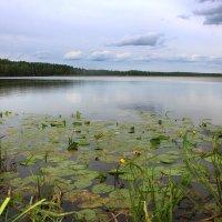 Тишь да гладь......(Озеро в Егорьевском районе) :: Ирина Александровна