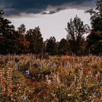 Природа :: Юлия Шевцова