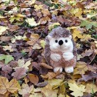 Затерянный в осени :: Наталья (D.Nat@lia) Джикидзе (Берёзина)