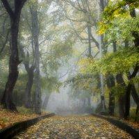 В парке туманном.... :: Юрий Цыплятников