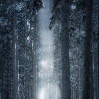Сход снега с деревьев. :: Вадим Басов