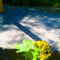 Сквозь  бетон пробирается к свету молодой клён. :: Андрей