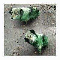Green dog :: Алексей