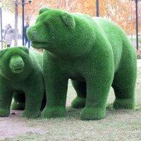 Медведи :: Андрей Лавров