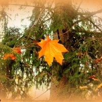 Кисловодская осень :: Нина Бутко
