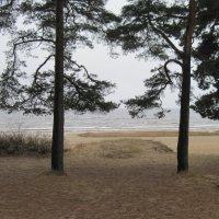 Финский залив. Ноябрь :: Маера Урусова