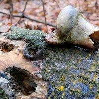 Ужасы нашего леса: что-то перестал я дятлам доверять..:) :: Андрей Заломленков