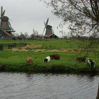 Голландская деревня :: IURII