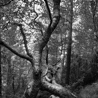В заколдованном диком лесу :: Mari_L