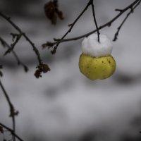 Последний подарок осени :: Сергей Бушуев