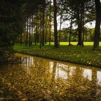 Желтая река.. :: Ирина Малышева