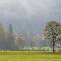 Альпийский туман :: Николай Танаев
