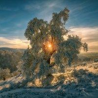 Проживи три месяца зимы и получи четвёртый в подарок! :: Андрей Лепилин