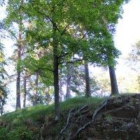 природа Карелии :: Дмитрий Солоненко