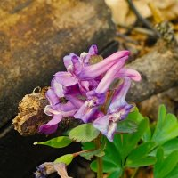 Весенние цветы :: Евгений Кочуров