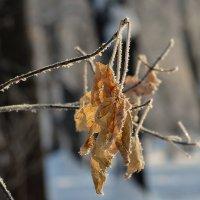 Осенний лист шагнул в зиму. :: Виктор Иванович