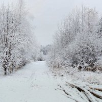 Ноябрь снежком порадовал :: Павлова Татьяна Павлова
