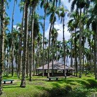 Пальмовый сад :: Андрей K.