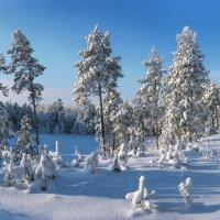 В ясный, морозный, погожий денёк :: Татьяна .