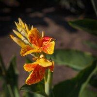 «  Дарите желтые цветы! Не верьте злым приметам!…» :: Андрей Нибылица