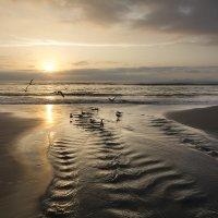Океан, закат и птицы :: Снежана Бесценная