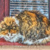 Кошки- стесняшки! :: Натали Пам