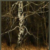 на краю леса :: Николай Староверов