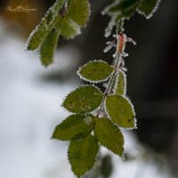 Краски природы :: Оксана Романова