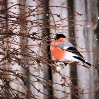 зимний птах :: Андрей