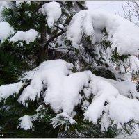 Снежные лапы...:) :: Любовь К.