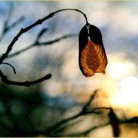 Осеннее одиночество.. :: Андрей Заломленков