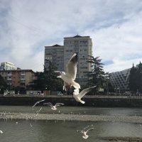 Чайки :: Светлана Ященко