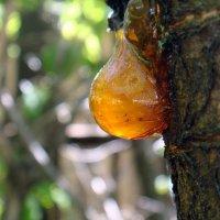 Янтарная слеза вишни. :: Елизавета Успенская