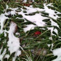 Снег прилёг,  кое где,  в ноябре. В городе Дзержинский. :: Ольга Кривых