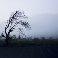 Где-то в Андах :: Снежана Бесценная