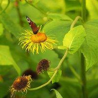 летом в травке или рай для насекомых :: Олег Лукьянов