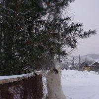 Че  уставился  ? :: Владимир Коваленко