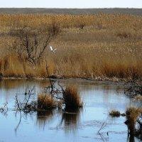 пейзаж с чайкой :: Natali
