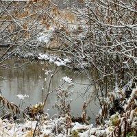 Выпал снег :: олег свирский
