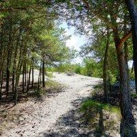 Крутая дорога к озеру Лебедь :: Ольга Чистякова