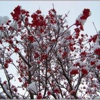 В снежном украшении.... :: Любовь К.