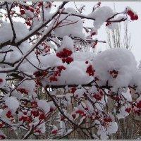 Снежные шапочки....:) :: Любовь К.