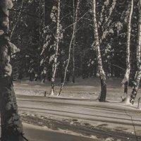 Зима. :: Владимир Буравкин