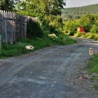 Хорошо в деревне летом.. :: Лариса Красноперова