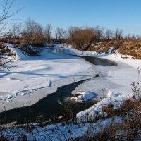 Замерзающая Лосиха :: Elena Sartakova
