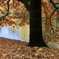 Осенний дуб. :: LIDIA V.P.