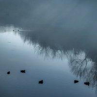 Вот и уходит осень, спрятавшись за туман... :: Лидия Цапко