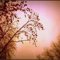 Рябина зимой :: Вера