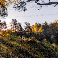 Утром в лесу. :: Владимир Безбородов